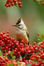 Twigs, red berries, bird