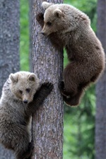 Preview iPhone wallpaper Two bear climb to the tree