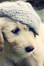 Preview iPhone wallpaper White puppy, hat