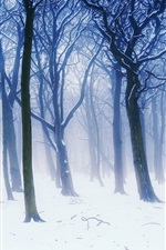 Preview iPhone wallpaper Winter forest scenery, fog, trees, branches, white snow