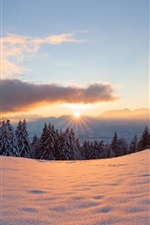 Preview iPhone wallpaper Winter, snow, sun, light, forest, trees, sunset