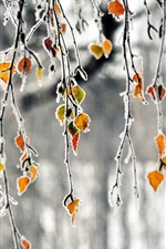 Preview iPhone wallpaper Autumn, branches, yellow leaves, frost