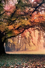 Preview iPhone wallpaper Autumn, landscape, golden, trees, foliage, nature
