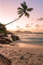 미리보기 iPhone 배경 화면 해변, 해안, 야자수, 바다, 일몰