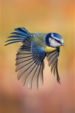 Preview iPhone wallpaper Bird close-up, chickadee flying, blur background