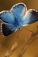 Preview iPhone wallpaper Blue butterfly, plants, bokeh