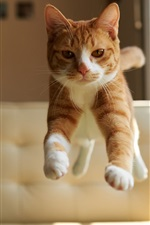Preview iPhone wallpaper Cat jump, house