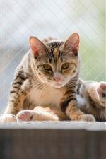 Preview iPhone wallpaper Cat sitting, window, pet