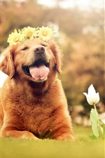 Preview iPhone wallpaper Cute brown dog, wreath, flowers, tulips, summer, nature