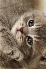 Preview iPhone wallpaper Cute gray kitten, sleep, face, eyes