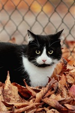 Preview iPhone wallpaper Fence, leaves, autumn, black and white cat
