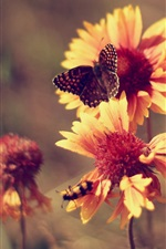 Flowers, butterfly, hot summer, marigolds