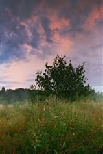 Preview iPhone wallpaper Forest, meadow, trees, birch, grass, summer, morning, clouds