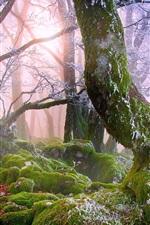 미리보기 iPhone 배경 화면 숲, 안개, 바위, 이끼, 나무