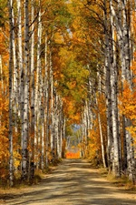 Preview iPhone wallpaper Forest, trees, birch leaves, autumn, road
