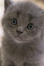 Preview iPhone wallpaper Gray kitten, eyes, snout, bokeh