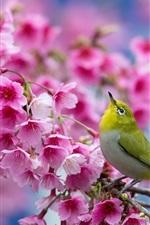 Preview iPhone wallpaper Japanese sakura, cherry flowers, bird, spring