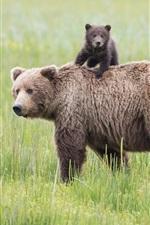 Parque Nacional do Lago Clark, Alaska, ursos, prado