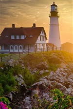 Lighthouse, morning, rocks, flowers, sunrise