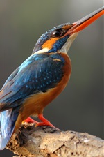 Preview iPhone wallpaper Lonely kingfisher, long beak