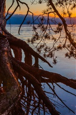 Preview iPhone wallpaper Michigan, lake, sunset, pine tree, roots
