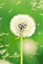 Preview iPhone wallpaper Nature, dandelion, bokeh, plant, green