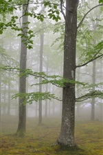 Preview iPhone wallpaper Nature forest trees, fog, foliage
