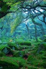 Preview iPhone wallpaper Nature landscape, forest, mist, rocks, moss, green