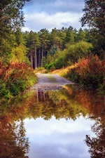 Preview iPhone wallpaper Nature scenery, autumn, road, forest, trees, water, puddle