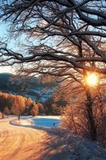 미리보기 iPhone 배경 화면 자연 겨울, 눈, 나무, 숲, 일몰 광선