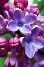 Preview iPhone wallpaper Purple flowers, lilacs