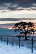 Road, fence, trees, snow, winter, sunset, sky, clouds