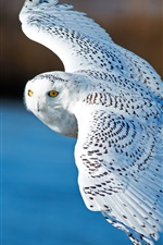 Preview iPhone wallpaper Snowy owl, flying, wings