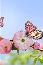 Preview iPhone wallpaper Spring, pink flowers, butterflies, blue sky