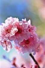 Preview iPhone wallpaper Spring, twigs, pink cherry flowers, blur background