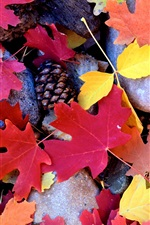 Preview iPhone wallpaper Stones, red maple leaves, pine cones, autumn