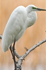 Preview iPhone wallpaper Tree, branch, bird, egret