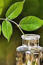 iPhone壁紙のプレビュー 花瓶、ガラス、枝、葉、緑