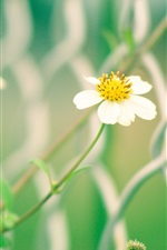 Preview iPhone wallpaper White yellow wildflowers, fence, blur