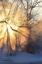 Preview iPhone wallpaper Winter, morning, sunrise, sun rays, fog, trees, snow