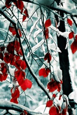 Preview iPhone wallpaper Winter, snow, trees, branches, red leaves