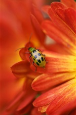Yellow red flower, insect, ladybug, blurring