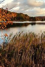 Preview iPhone wallpaper Autumn, pond, marsh, grass, trees, dry season