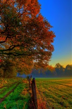 Preview iPhone wallpaper Autumn sunset nature, trees, road, meadow, fields