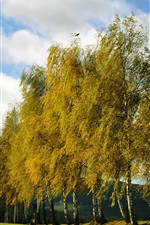 Preview iPhone wallpaper Autumn, trees, spruce grove, birch