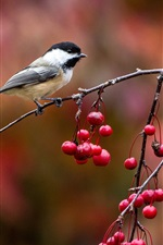 Preview iPhone wallpaper Bird close-up, chickadee, twig and red berries, autumn