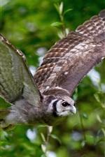 Preview iPhone wallpaper Bird, owl, wings, flight