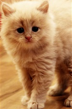 Preview iPhone wallpaper Cute kitten in the room