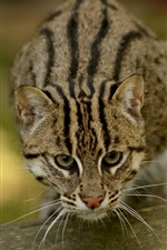 Preview iPhone wallpaper Fishing cat