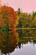 Preview iPhone wallpaper Forest, trees, lake, autumn